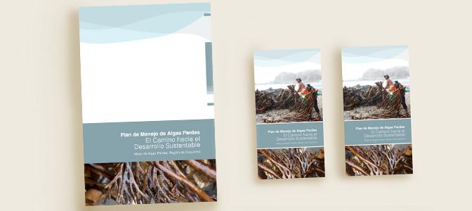 RG - Ilustración y diseño para Mesa de Algas Pardas - Todos los derechos reservados por Romina Guerra Alvarez.©